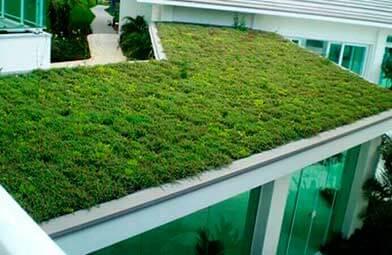 Construindo um Telhado Verde